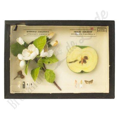 """Insectenlijst schadelijke insecten """"No. 21"""""""