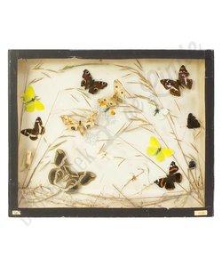 """Vlinderlijst Europese vlinders """"No. 27"""""""