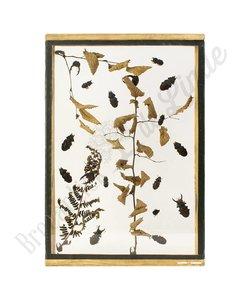 """Insectenlijst met kevers en torren """"No. 28"""""""
