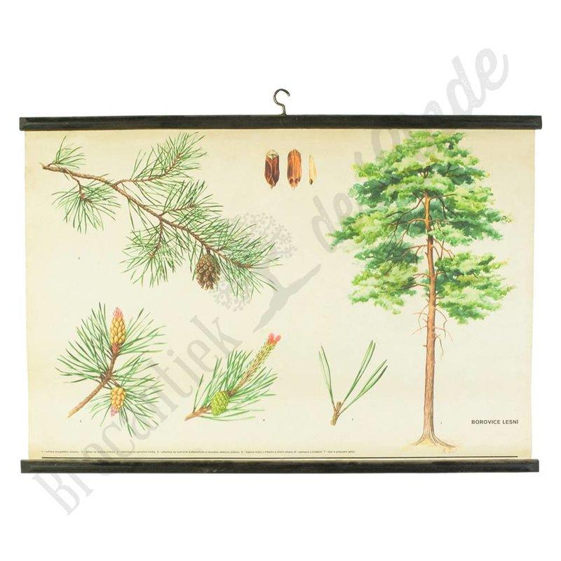 Botanische schoolplaat Grove Den