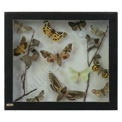 Vlinderlijst ''No. 24''