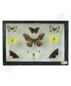 Vlinderlijst ''No. 34''