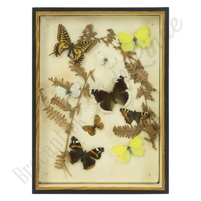 Vlinderlijst ''No. 51''