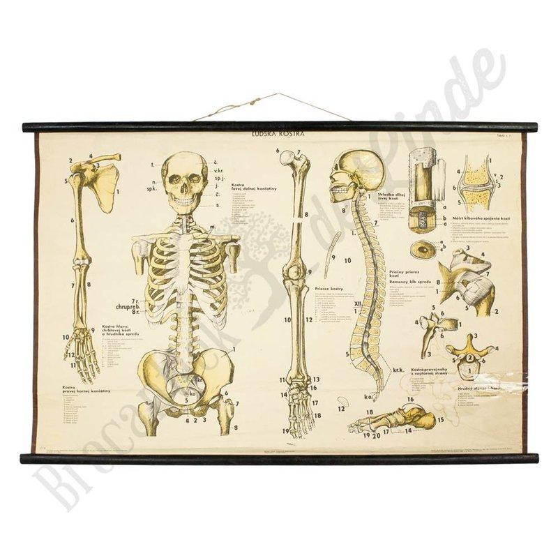 Vintage anatomische schoolplaat ' lichaam'