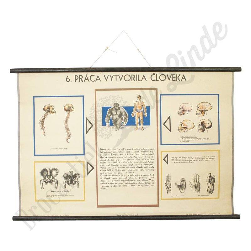 Vintage schoolplaat zoölogisch 'revolutie' No. 6