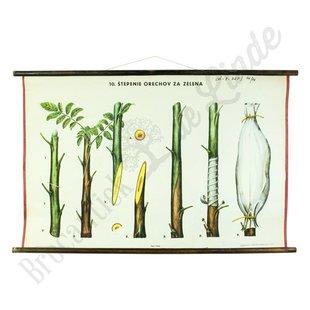 Botanische schoolplaat 'enten'