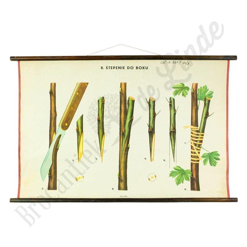 Botanische schoolplaat enten No. 8
