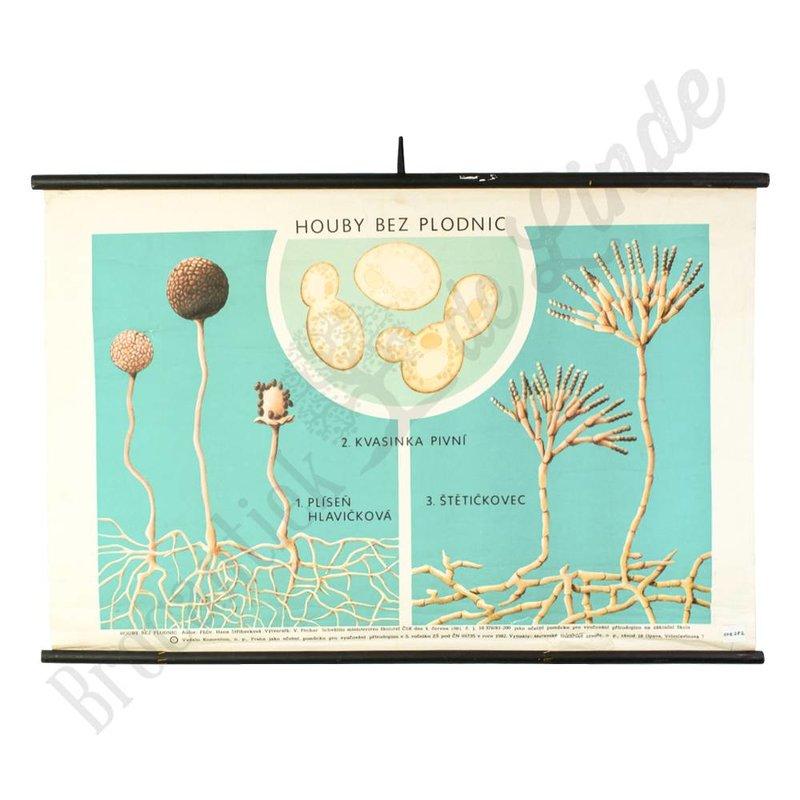 Oude botanische schoolplaat 'cellen'