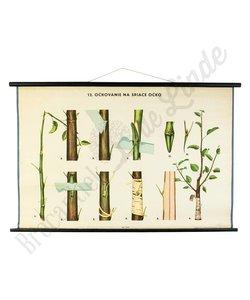 Botanische schoolplaat enten No. 12
