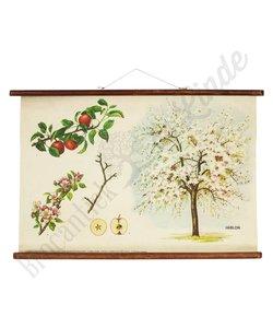 Vintage botanische schoolplaat