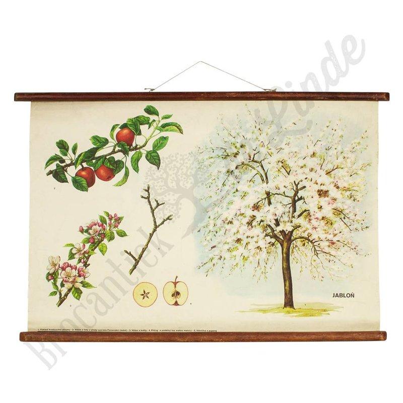 Vintage botanische schoolplaat 'Appelboom'