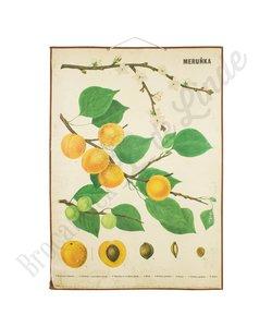 Botanische schoolplaat Perzik