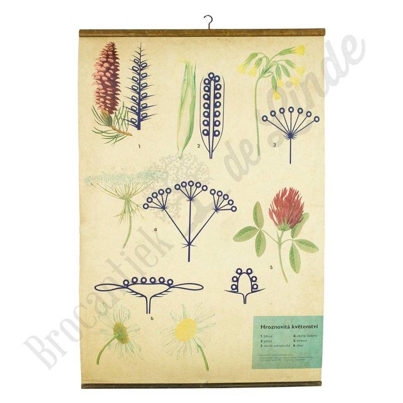 Botanische schoolplaat bloemen