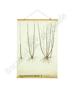 Botanische schoolplaat snoeien No. 6