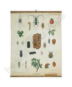 Vintage schoolplaat Insecten