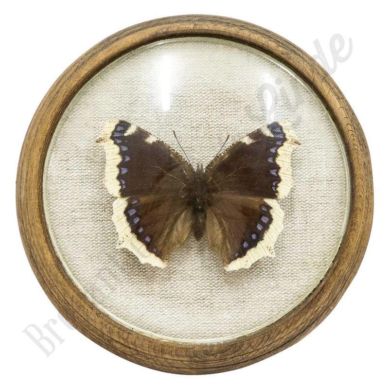 Vlinder uit 1880 No. 2