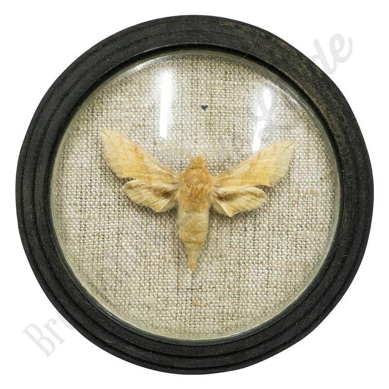 Vlinder uit 1880 No. 8