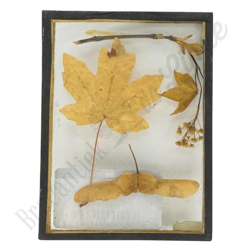 Botanische vintage lijstje