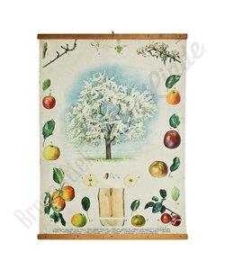Botanische schoolplaat 'Wilde appel'