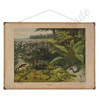 Vintage zoologische schoolplaat 'Reptielen'