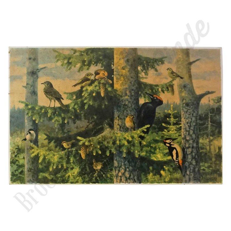 Zoölogische schoolplaat 'Vogels No. 2'