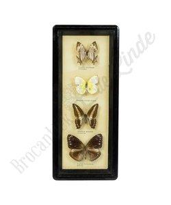 Vintage vlinderlijst No. 76