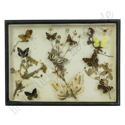 Vintage vlinderlijst No. 66