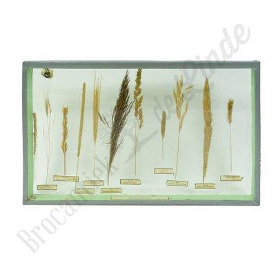 Vitrine lijst 'Bloeiende grassen'