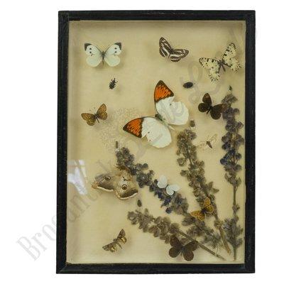 Vlinder/kever lijst No. 65