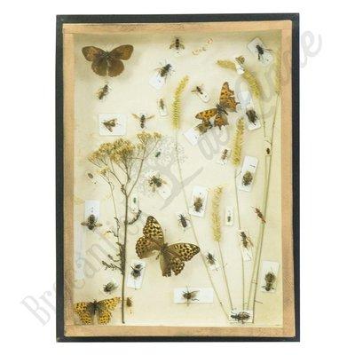 Vintage vlinderlijst No. 71