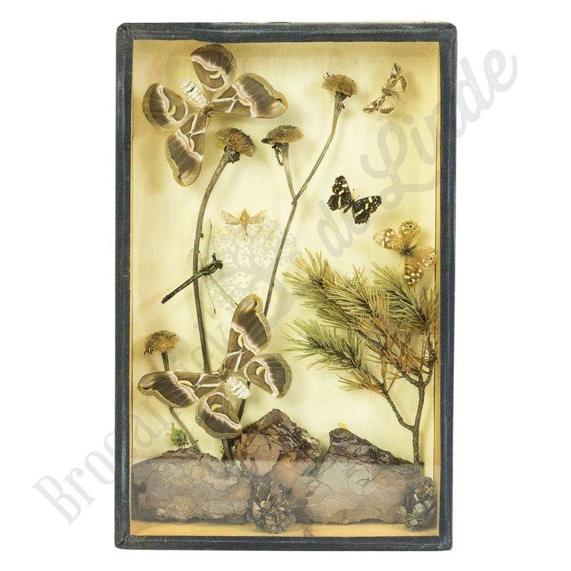 Vintage vlinderlijst No. 72