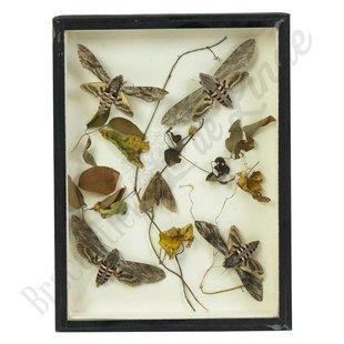 Vlinderlijst