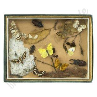 Vlinderlijst No. 36