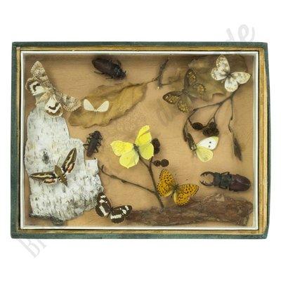 Vintage vlinderlijst No. 36