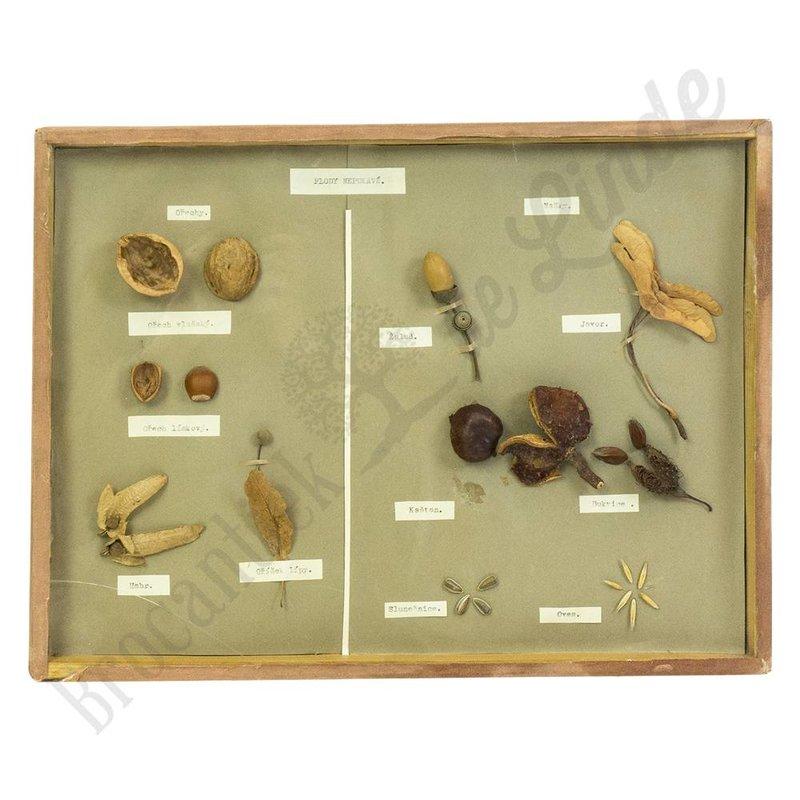 Botanische vitrinelijst No. 17