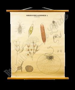 Anatomische schoolplaat 'Microorganismer'