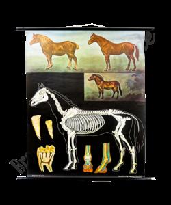 Jung Koch Quentell schoolplaat 'Paard'