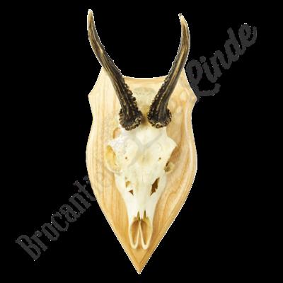 Vintage Reegewei  'Wooden&Skull'