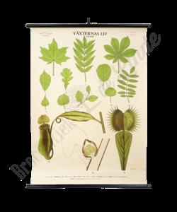 Botanische schoolplaat 'Bladeren'