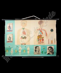 """Anatomische schoolplaat """"Het lichaam"""""""