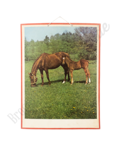 Zoölogische schoolplaat 'Paarden'