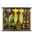 Botanische schoolplaat (Sleutelbloem)