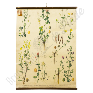 Botanische schoolplaat - Planten soorten'