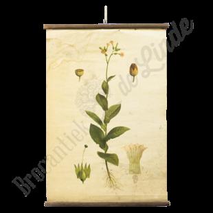 Botanische schoolplaat 'Plant'