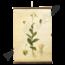 Botanische schoolplaat (Plant)