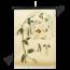 Botanische schoolplaat (Bonen)