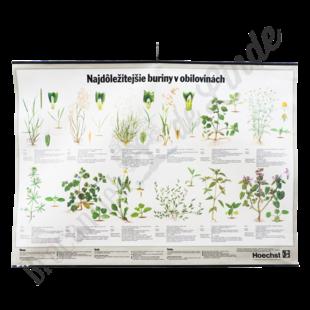 Botanische schoolplaat 'Onkruid'
