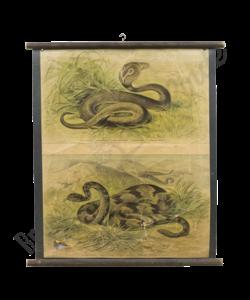 Zoölogische schoolplaat (Slangen)