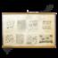Anatomische schoolplaat (Dierlijke cellen)