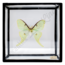 Vintage vlinderlijst No. 94